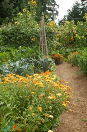 2013 summer garden