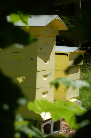 2013 apiary
