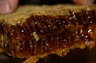 1st honey harvest