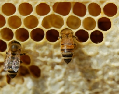 capping the honey