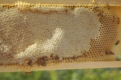 capped honey