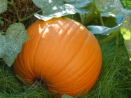 Jack the pumpkin!
