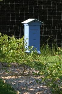 the blueberry hive split