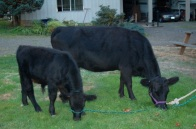 Belle Forche Merrideth at 5 years, with Bones