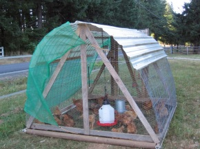hoop coop for pastured fryers
