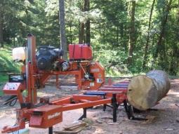 oak log