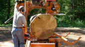1st cut on an oak log