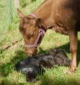 FullCircle Eloise & 1 day old FullCircle Otis