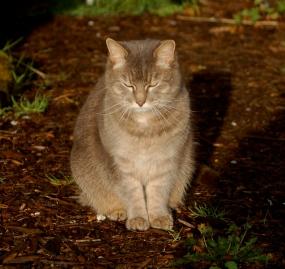 Puss- barn & garden cat