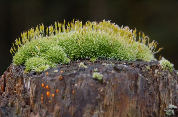 Forest atop a fencepost.