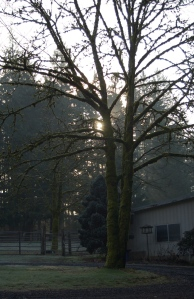 1-25-2014   An achingly beautiful January morning.