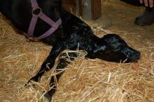 FullCircle Sophie newborn.