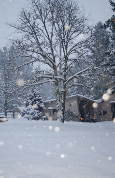 A Magical Winter Wonderland.