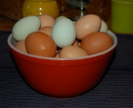 Bowl of eggs