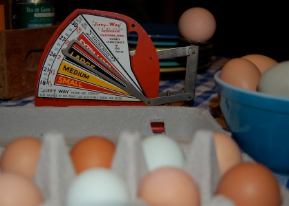The egg scale.