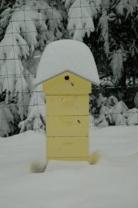 Beehive February 2014