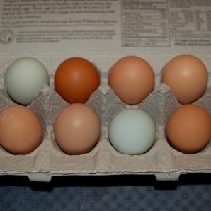 1. farm fresh eggs.