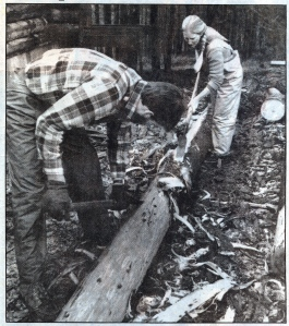 peeling logs