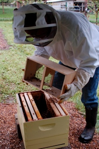 package emptied into hive