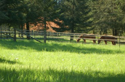 2 old horses relaxing in the sun