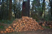woodland woodpile