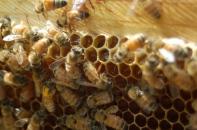 storing nectar
