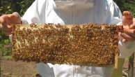 comb of honey