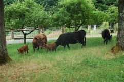 6/12/14- the herd