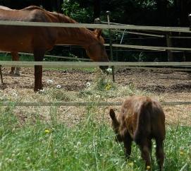 lunch buddies- Mitzi & Norman