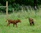 can't catch me...
