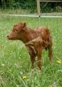 FullCircle Lucy 2 days old