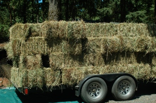 load of hay