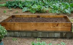 rake & water in cover crop seeds