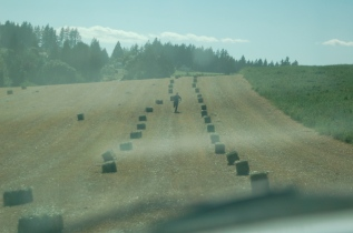 ribbons of bales