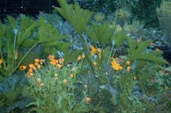 squash & flowers