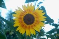 good morning sunshine!