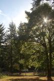 early Autumn sun