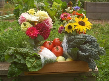 early autumn FarmShare box