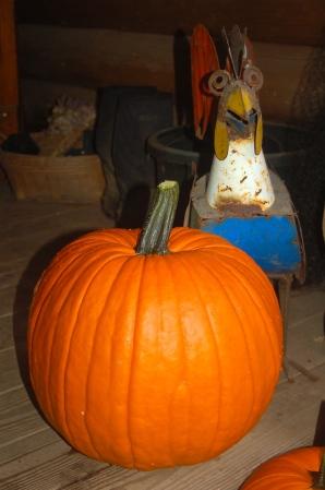 Rocky Rooster & Jack Pumpkin