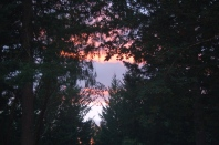 Autumn sunset thru the trees