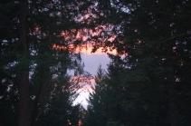 Autumn sunset thru the trees
