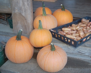 pie pumpkins & fingerling potatoes