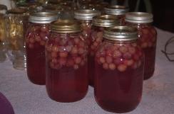 jars of grape juice cooling