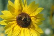 honeybee cafe