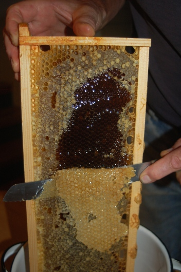 honey harvest