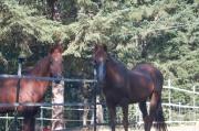9/14- Mitzi & Gary enjoying the autumn sunshine
