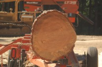 Douglas Fir log