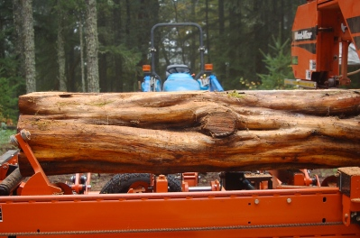 Pacific Yew log