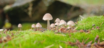 tiny woodland jewels