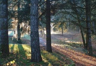 early morning sun thru the trees
